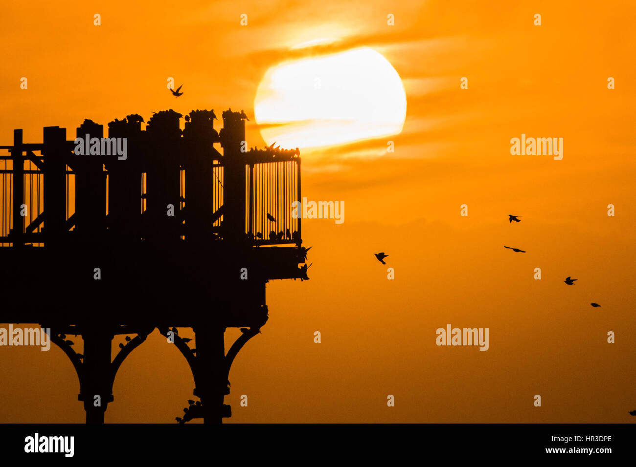 Aberystwyth Wales UK, Sunday 26 February 2017 UK weather: At sunset, flocks of starlings fly in to crowd together - Stock Image