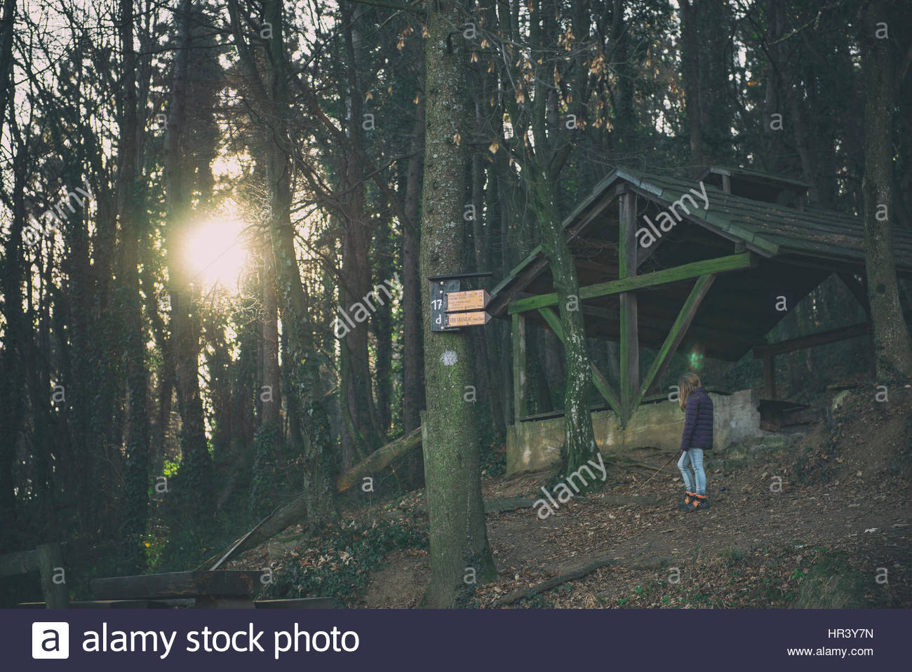 Girl standing alone in the dark forest - Stock Image