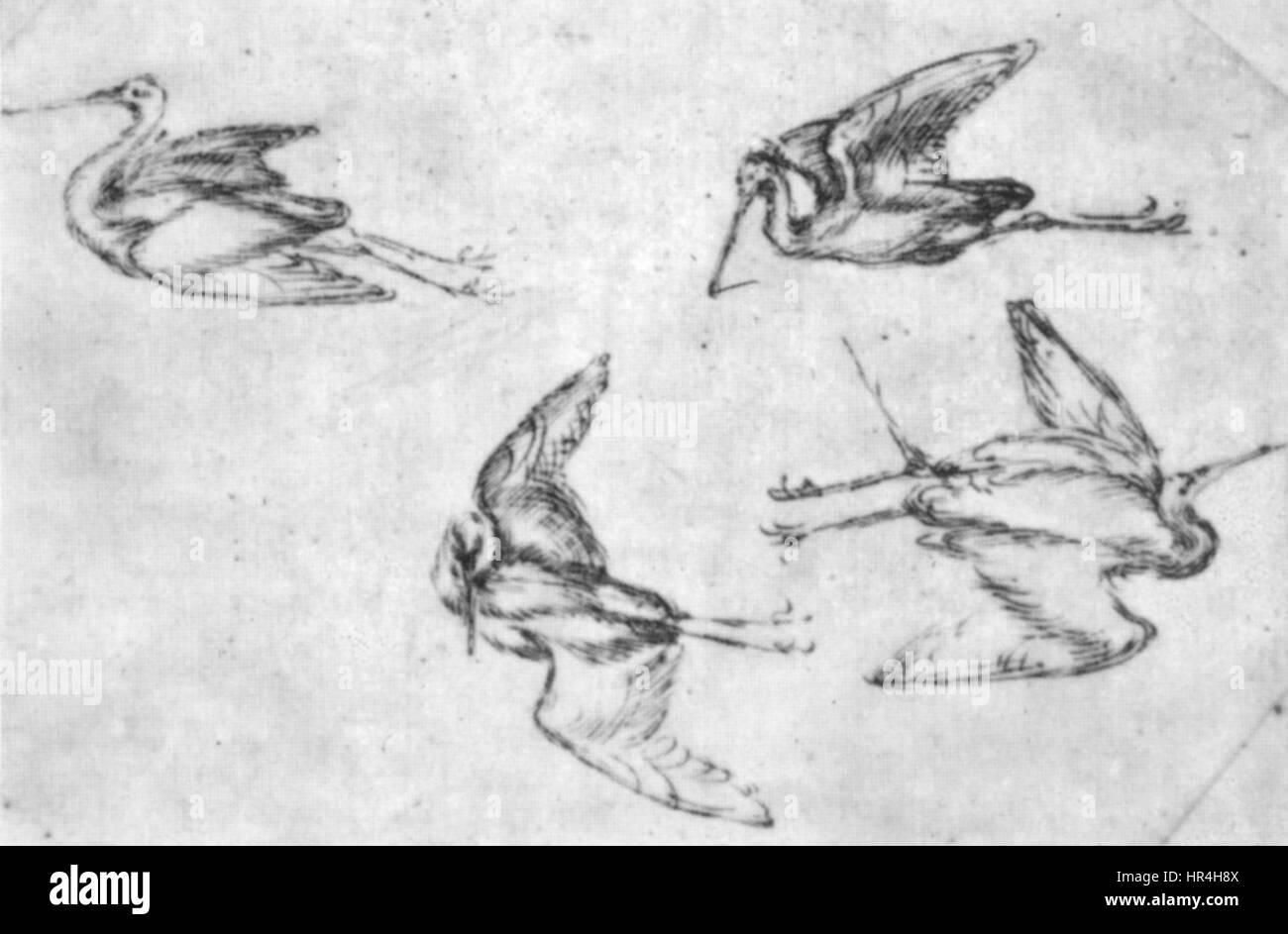 Pisanello, disegni, louvre 2469 - Stock Image