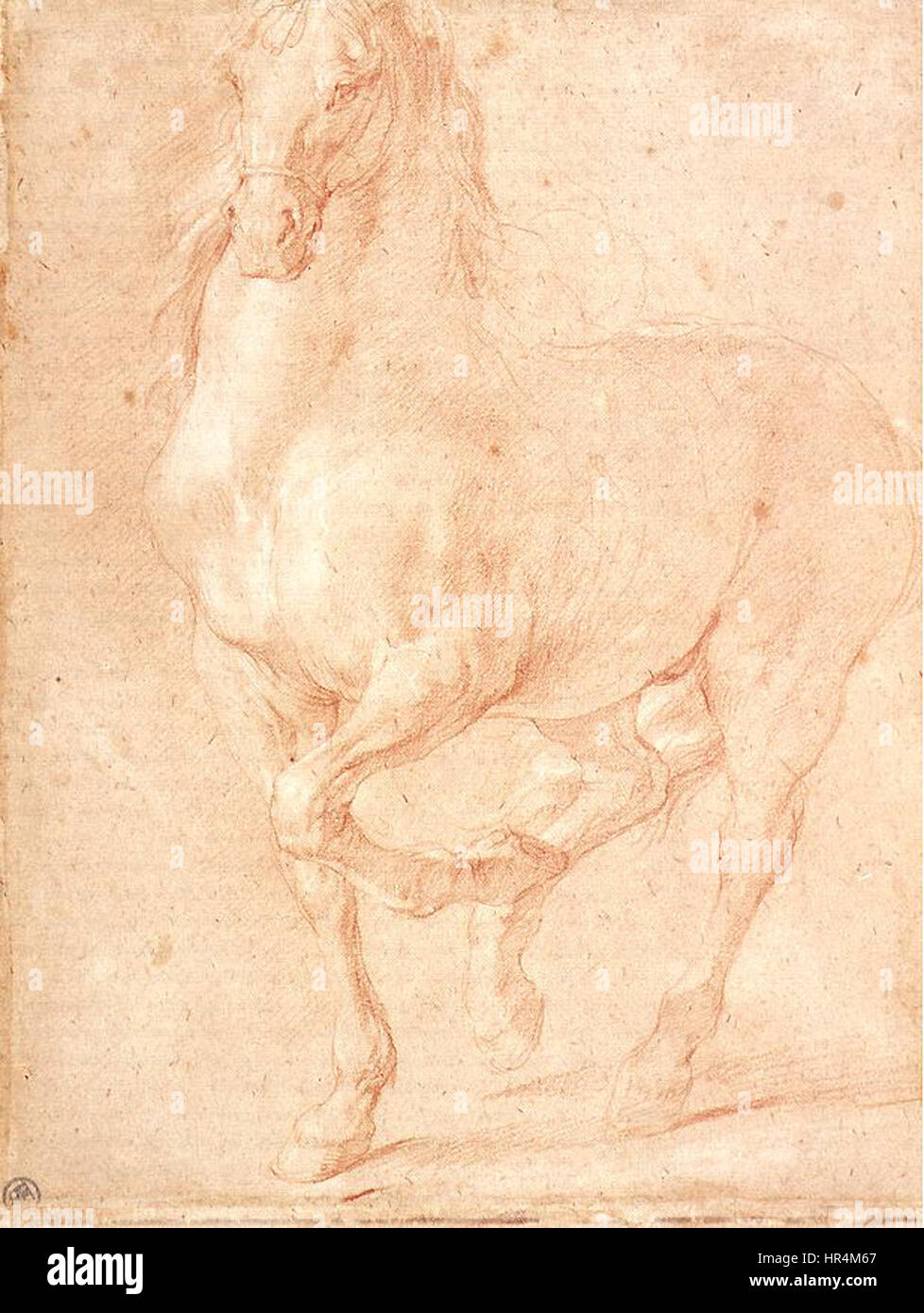 Pierre Puget - Study of a Horse - WGA18480 - Stock Image