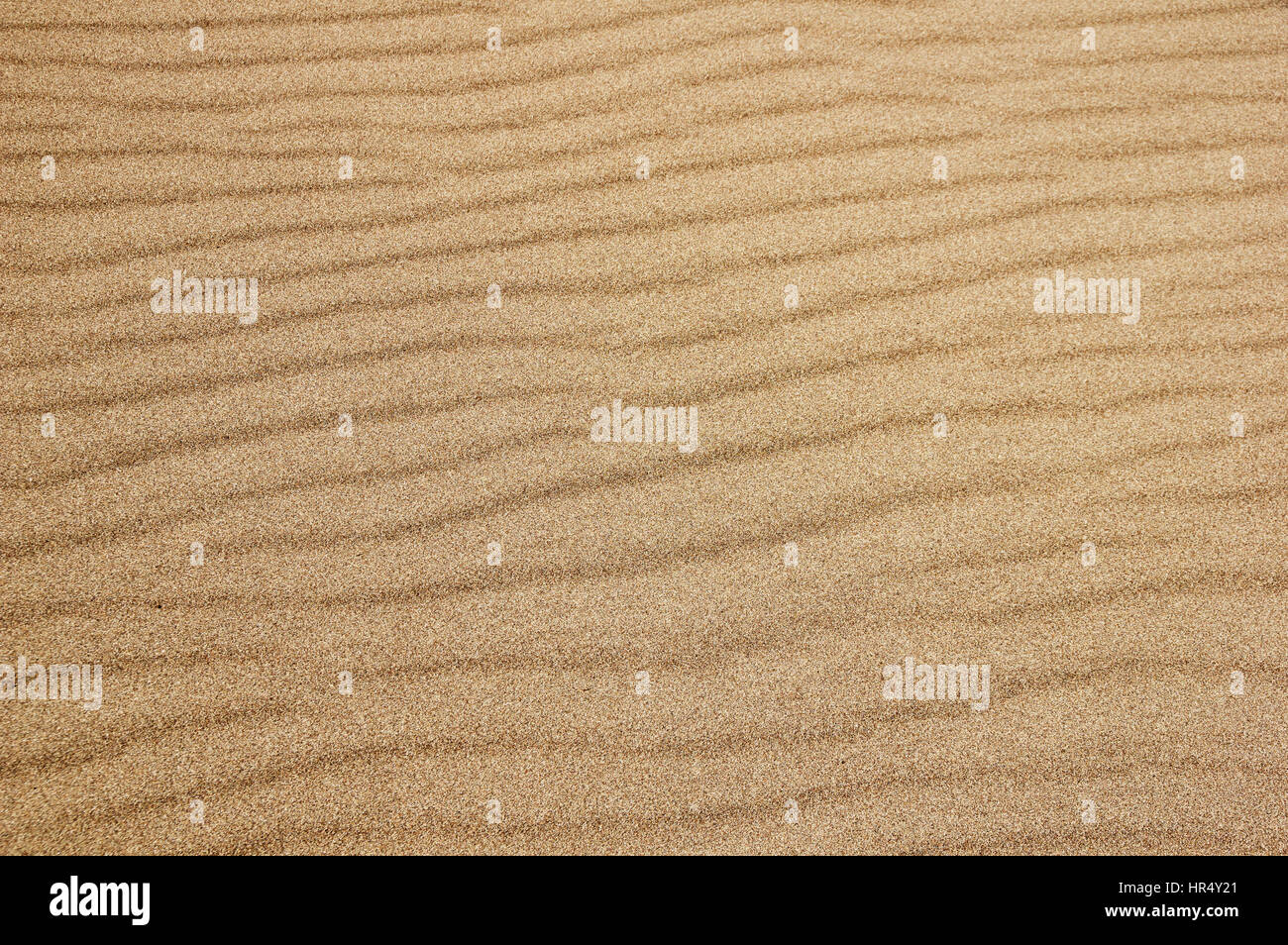 detail of rippled sand surface at great sand dunes national park - Stock Image