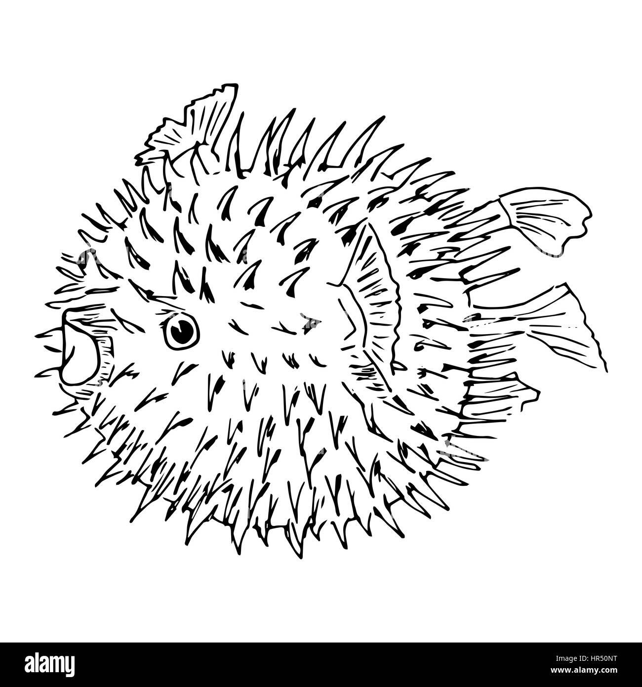 Blowfish Or Diodon Holocanthus Puffer Fish Balloonfish Globefish Swellfish Bubblefish
