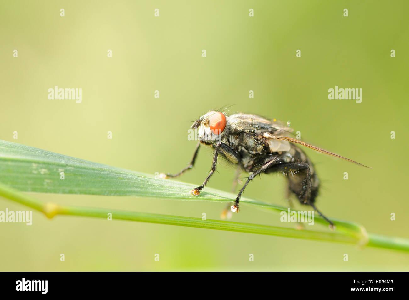 Housefly © Pawel M. Mikucki Stock Photo