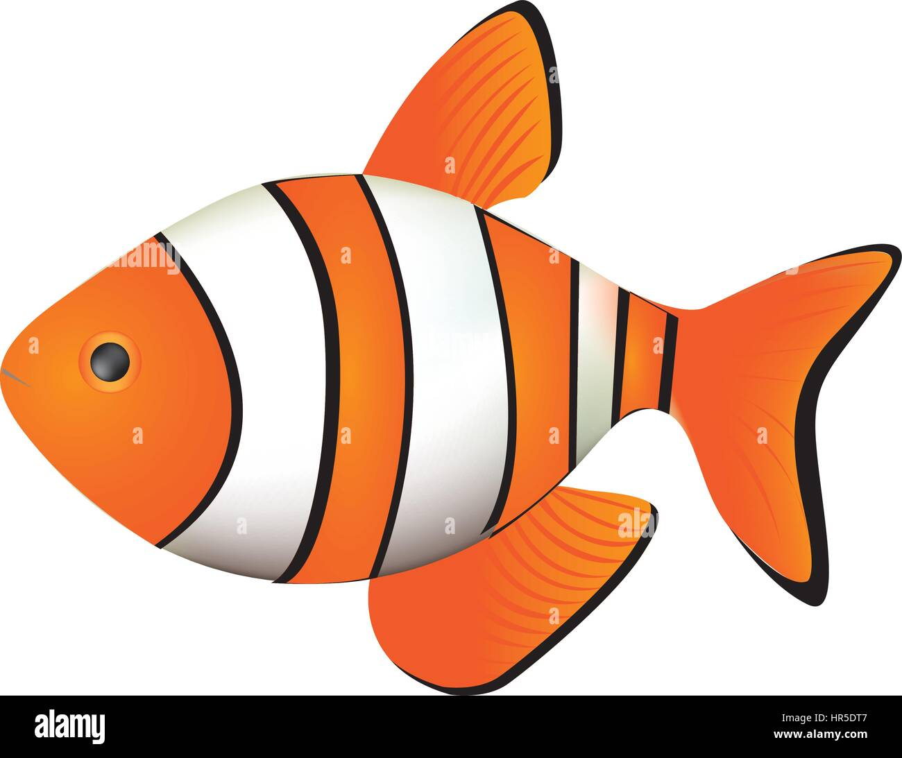 colorful picture clownfish acuatic animal - Stock Vector