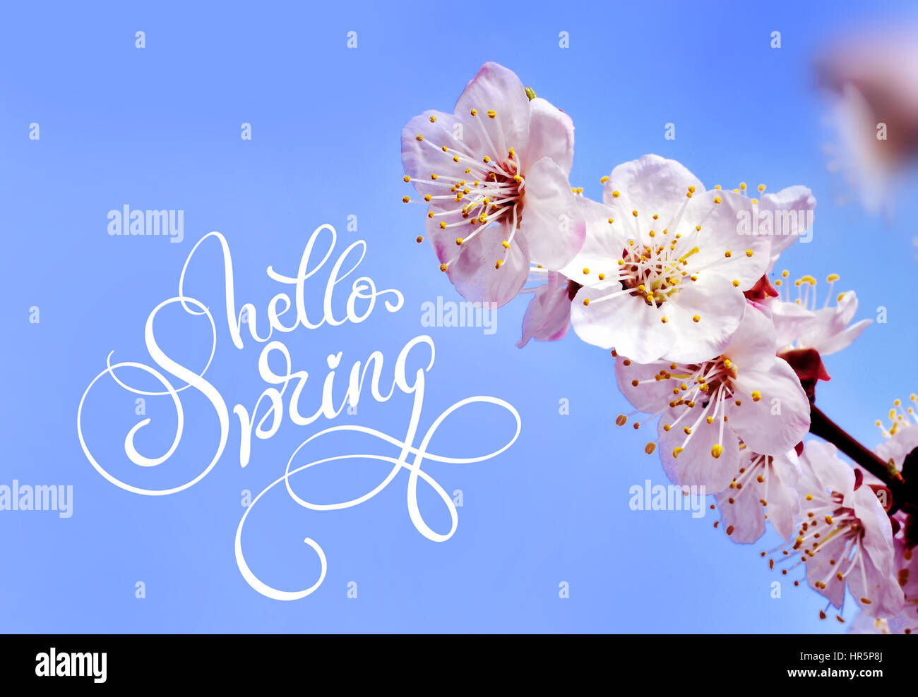 Spring flowers border and text hello spring calligraphy lettering spring flowers border and text hello spring calligraphy lettering mightylinksfo
