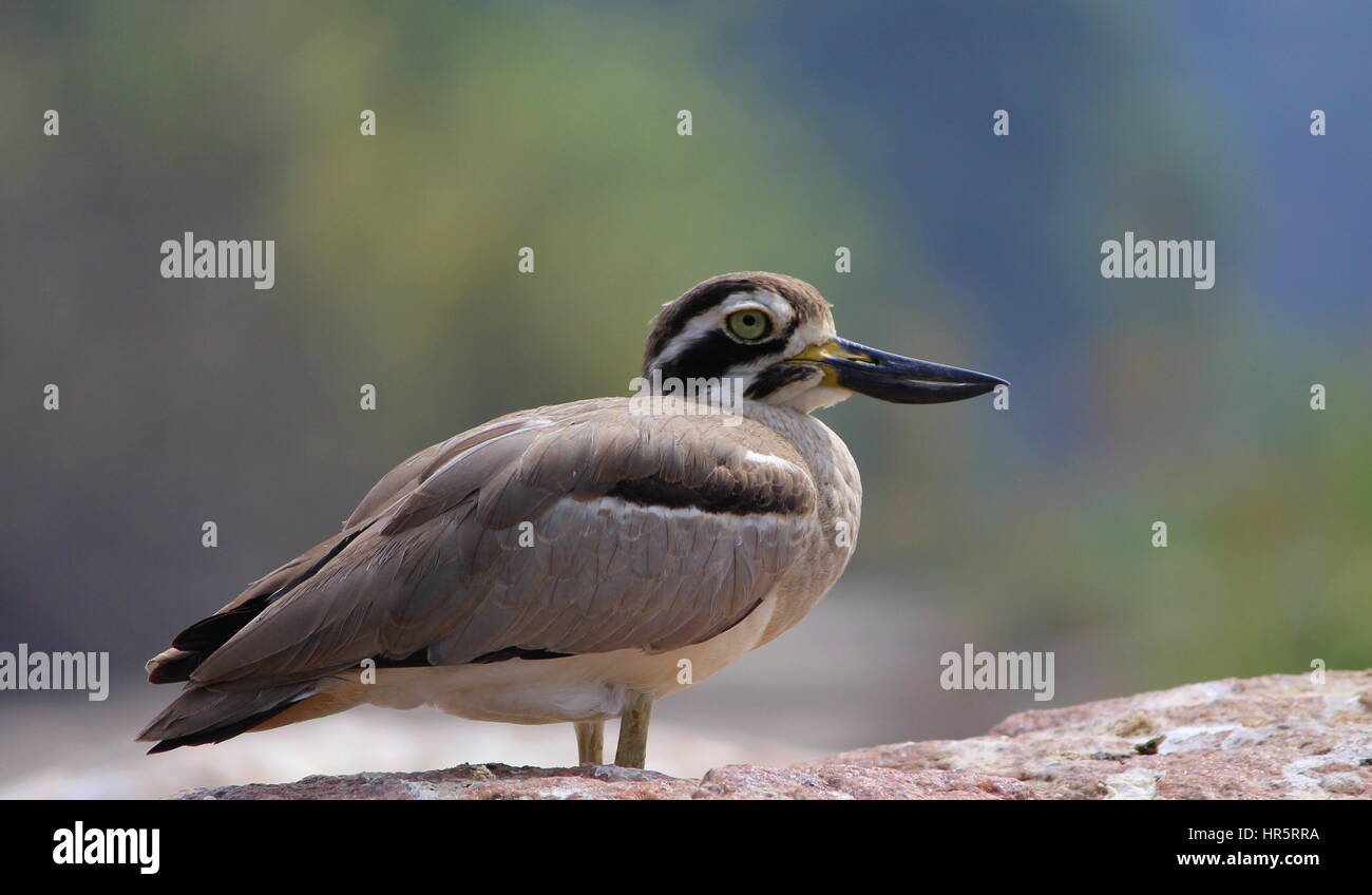 Birds of Indian Subcontinent - Lets fly away with the most beautiful & vibrant species of the world... - Stock Image