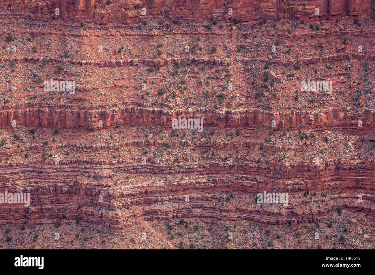 A detail of a canyon wall and it's cliff bands, A closeup of a yucca plant, Grand Canyon's south rim, Grand - Stock Image