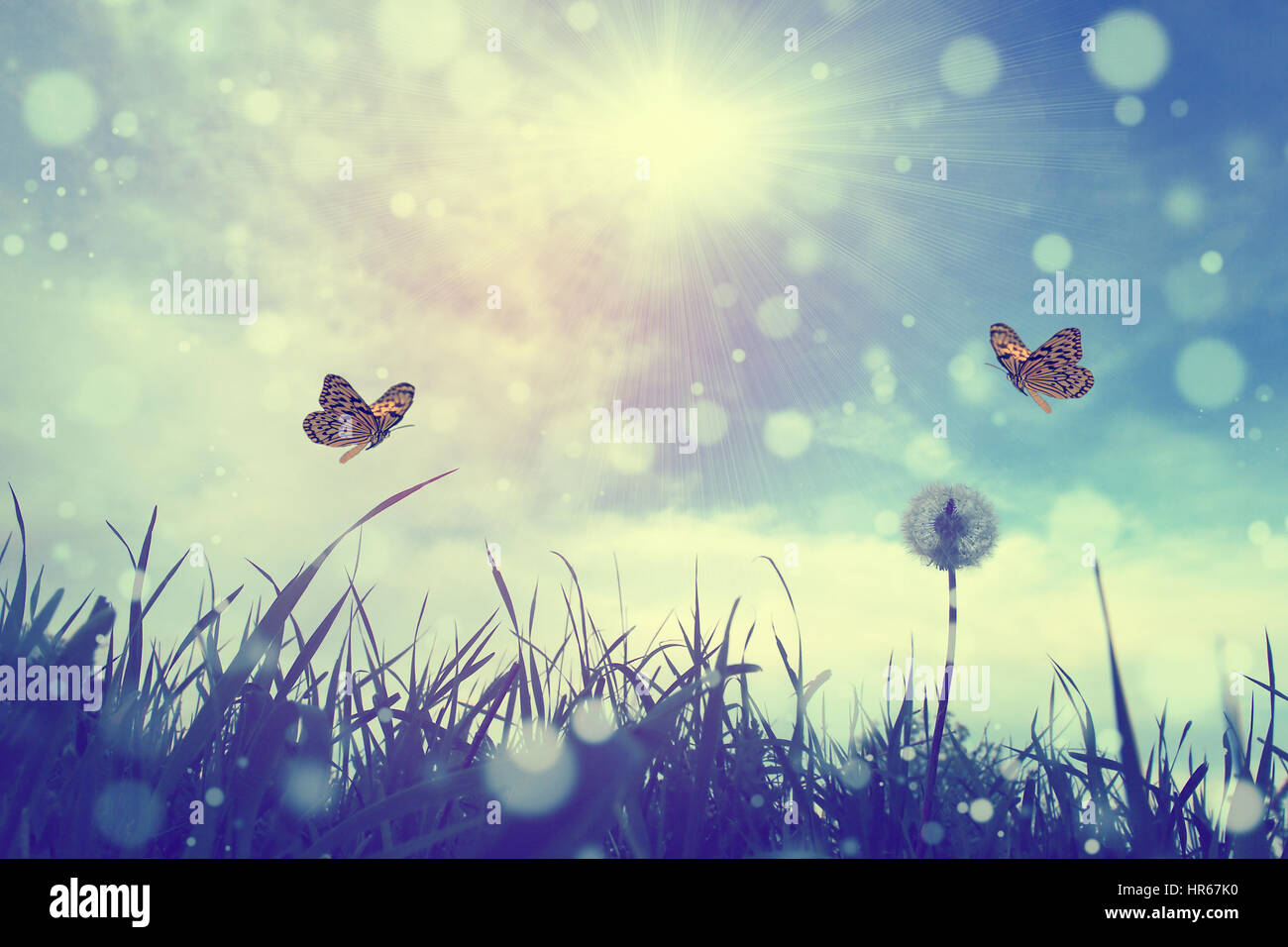 Butterfly and flower - Stock Image