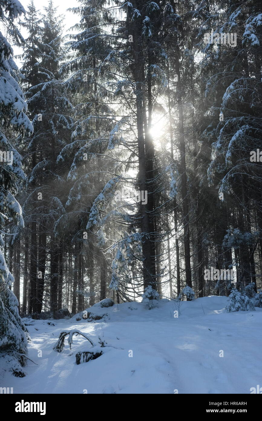 A sunny winterday in the norwegian woods. - Stock Image