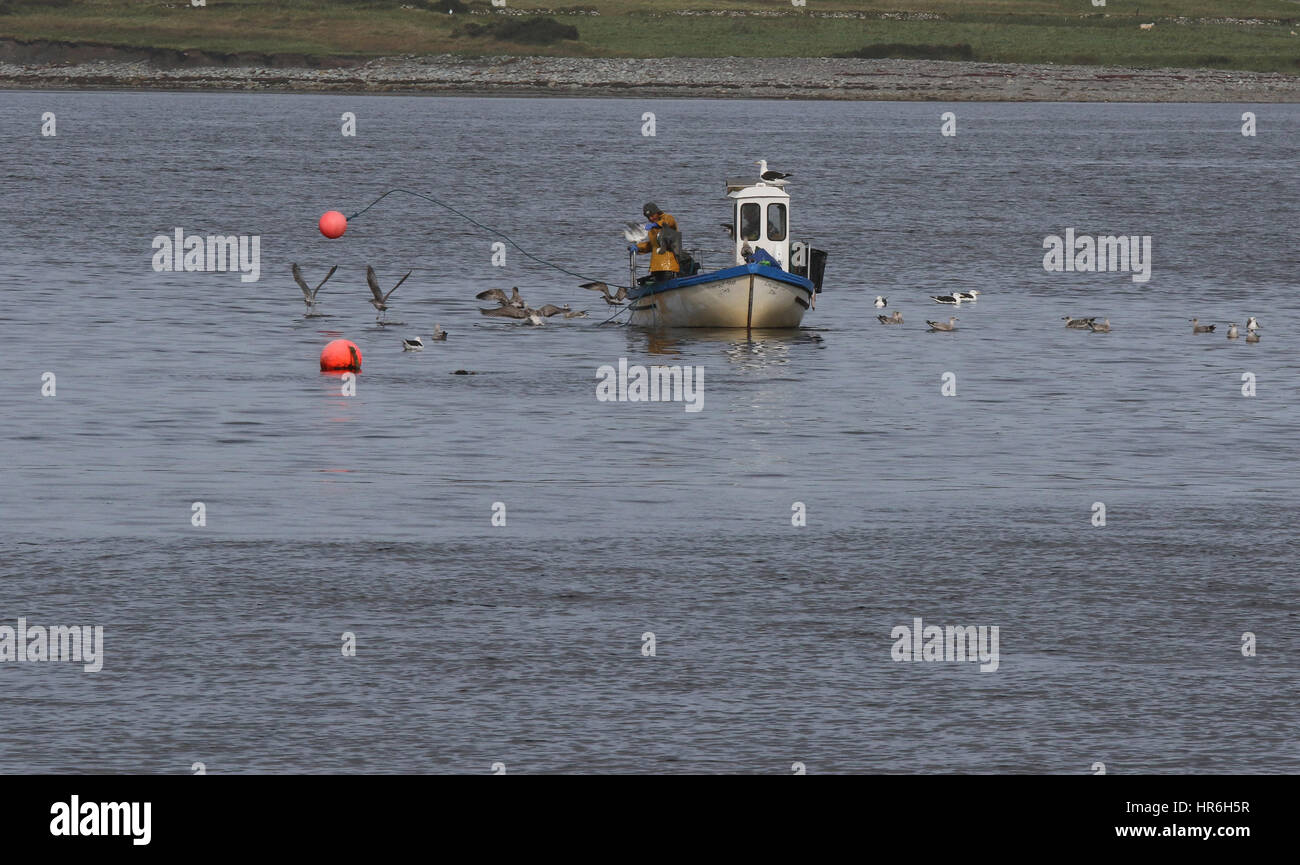 Fisherman throwing out lobster pot from lobster fishing boat off Valentia Island, County Kerry, Ireland. - Stock Image