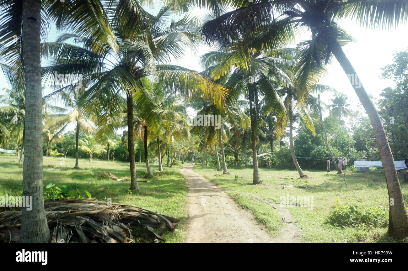 Garden Design Little Of Coconut Trees In Courtyard Indian Home