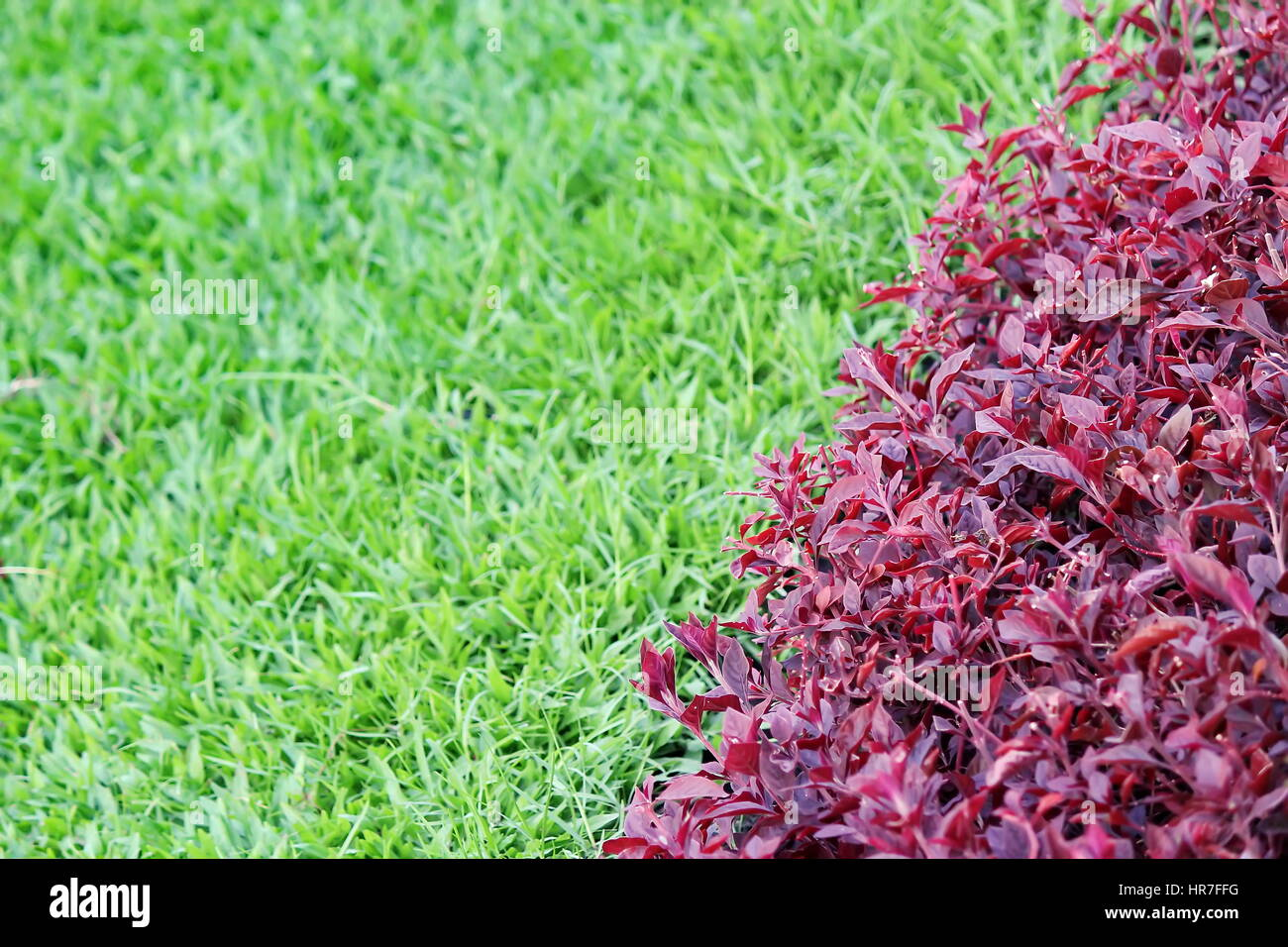 Two Tone Grasses in a Public Park - Stock Image