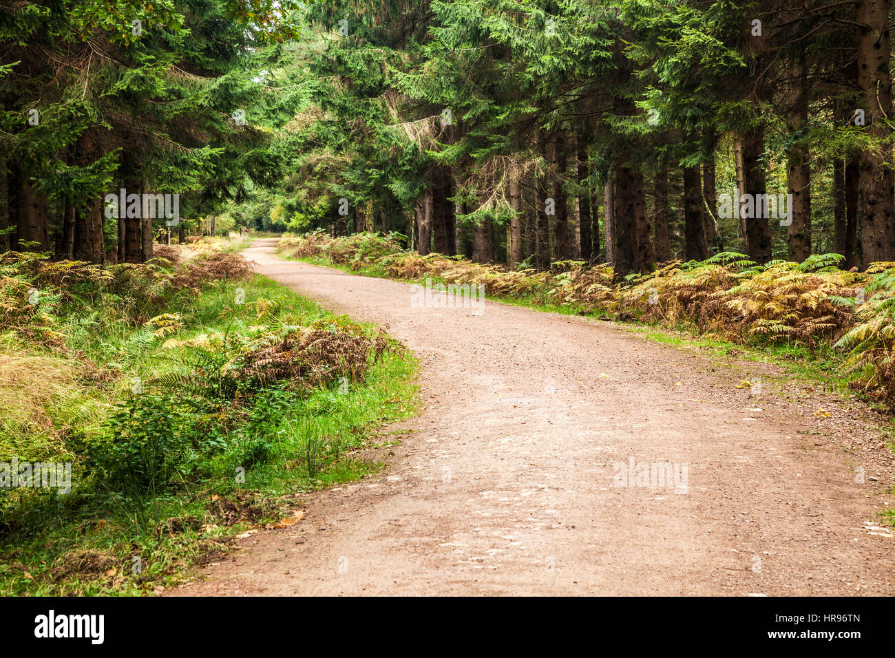 Woodland path through the Forest of Dean in Gloucestershire. - Stock Image