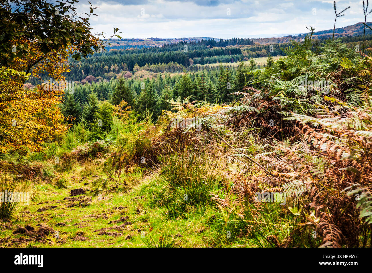 View over the Forest of Dean in Gloucestershire. Stock Photo