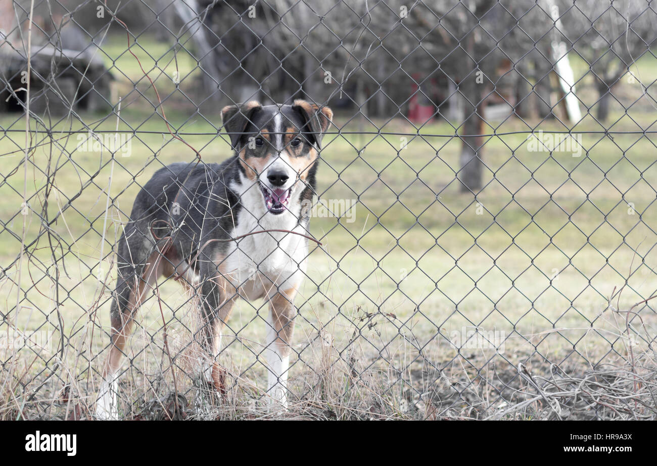 dog behind fence in garden Stock Photo