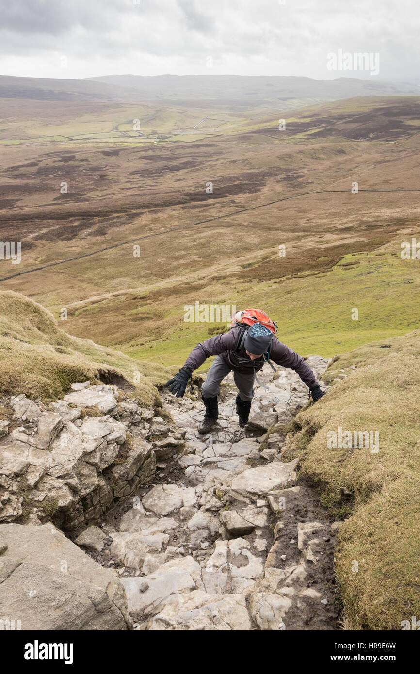 A hill-walker climbing up Pen-y-Ghent in the Yorkshire Dales - Stock Image