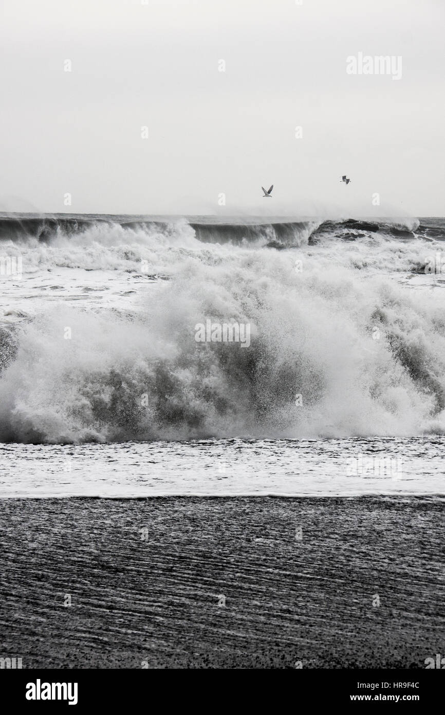 Crashing waves on Vik beach with birds flying - Stock Image