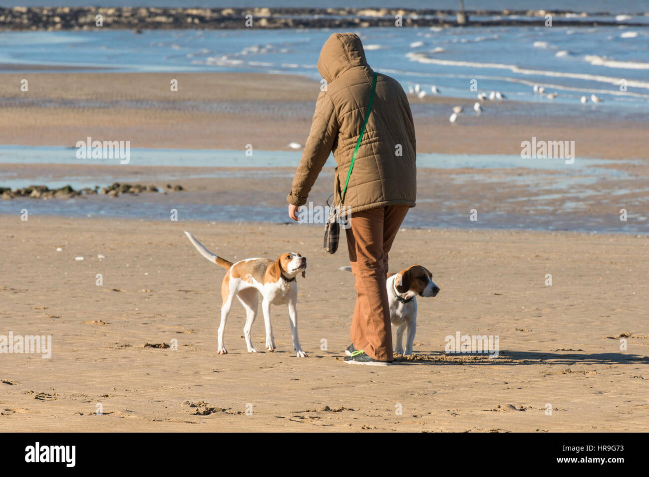 A man with his two dogs at the seaside in Margate, Kent. - Stock Image