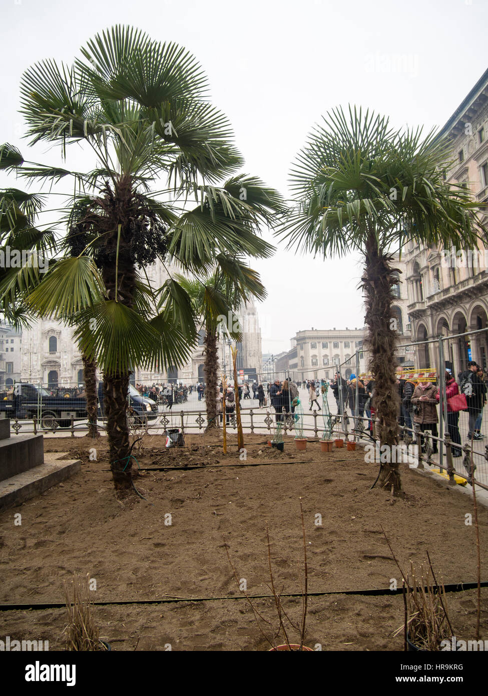 Starbucks palms in Milan, and taxi drivers protesting against uber inPiazza Duomo, during Milano Fashion Week - Stock Photo