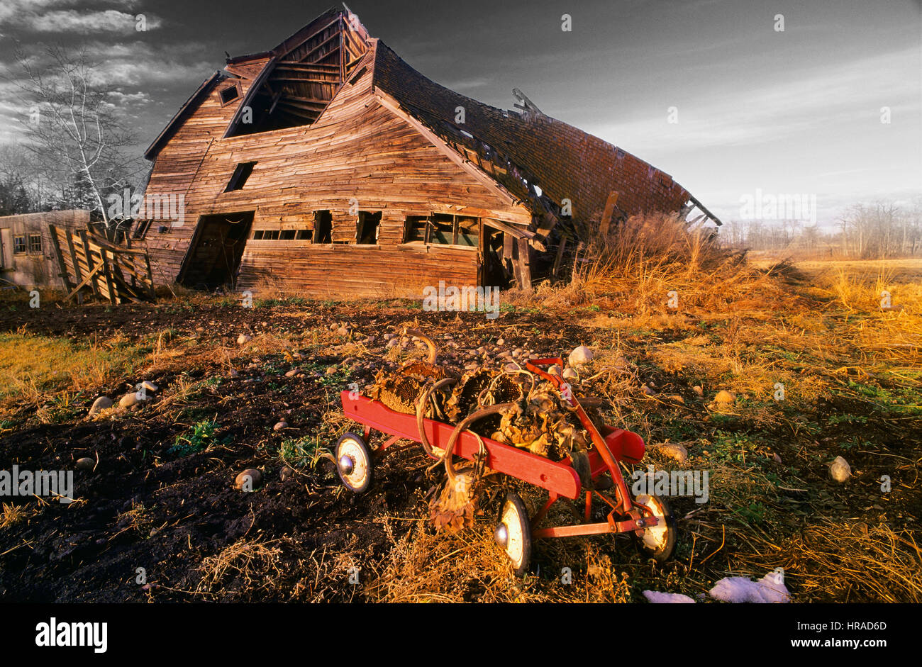Discarded Toy Wagon in front of a Falling Down Barn - Stock Image
