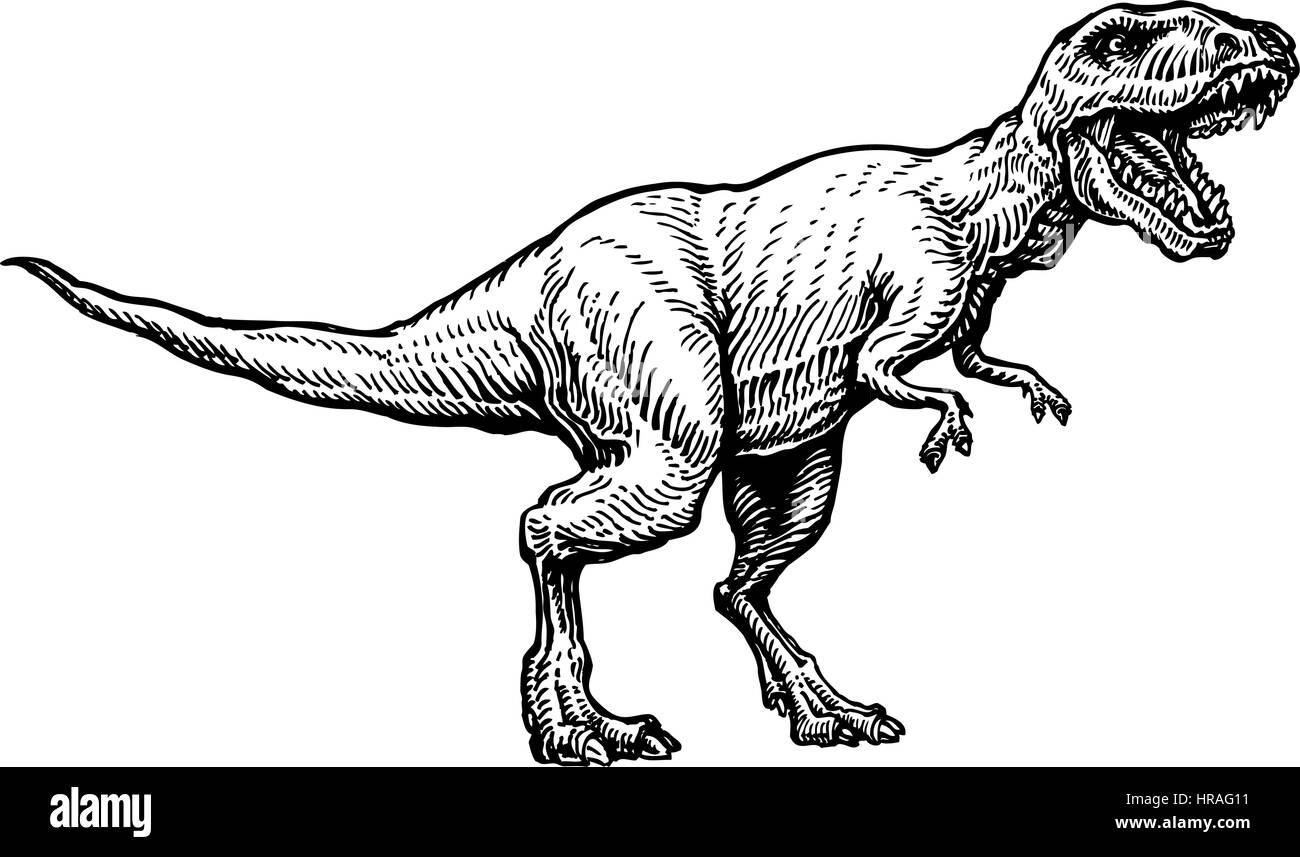 Angry tyrannosaurus rex with open huge mouth, sketch. Hand-drawn carnivorous dinosaur. Animal vector illustration - Stock Image