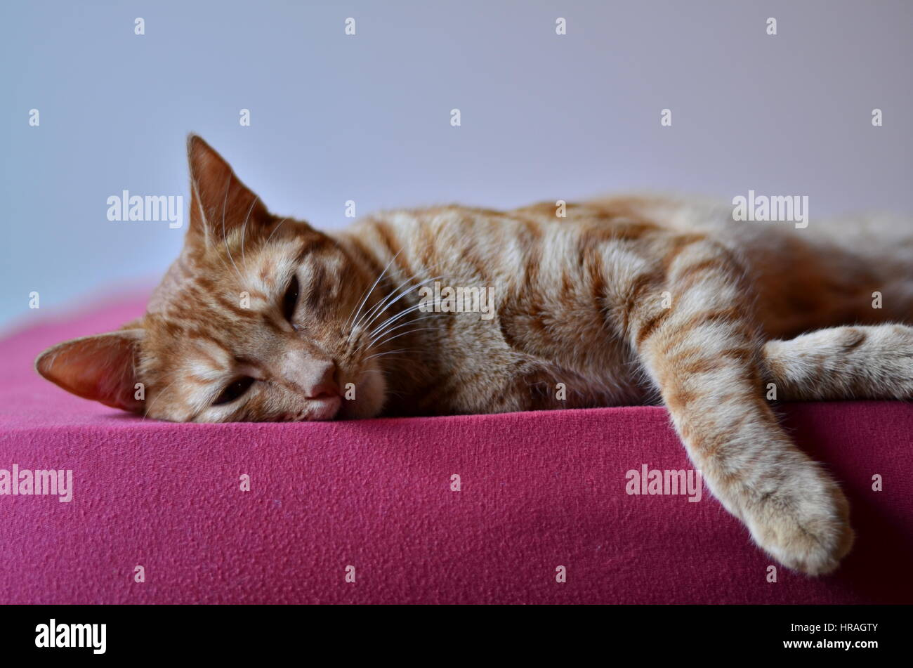Cat in a nap time - Stock Image