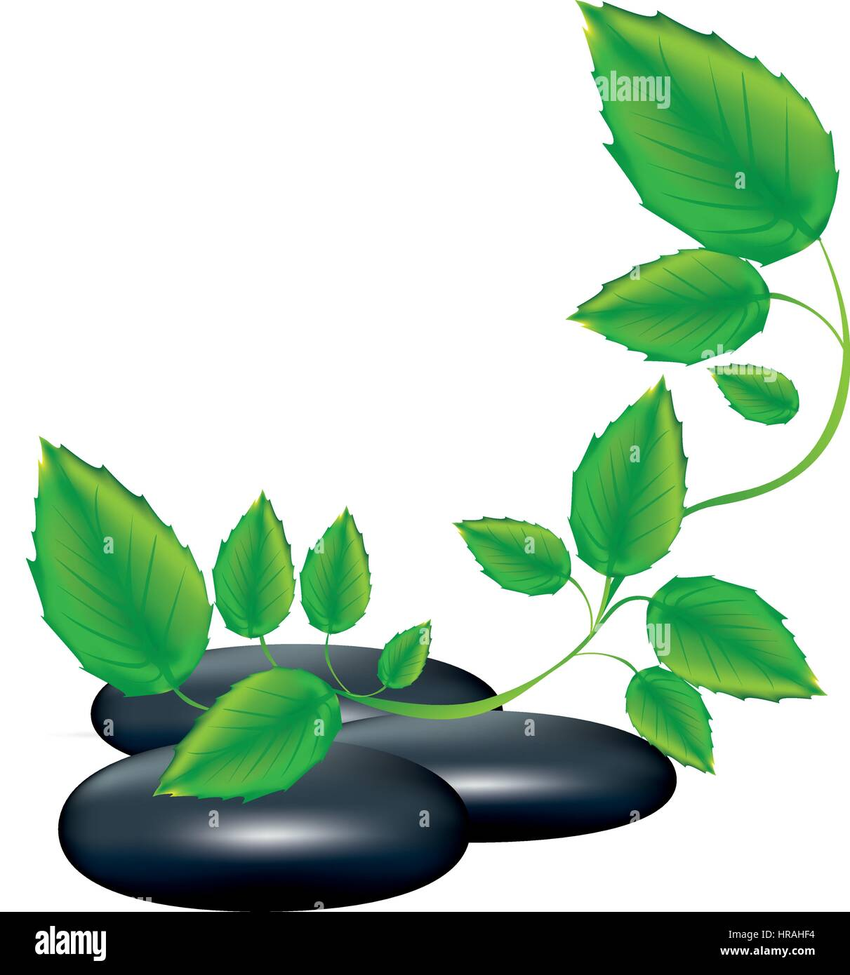 spa therapy lava stones and creeper plant - Stock Image