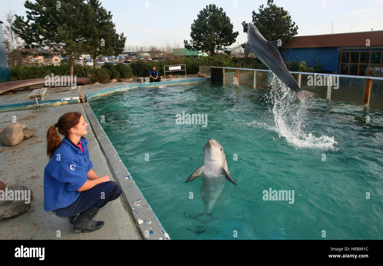 dolphines in zoo park Stock Photo