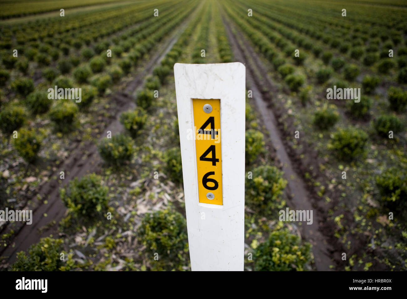 spraying of insecticide and fertilizers - Stock Image