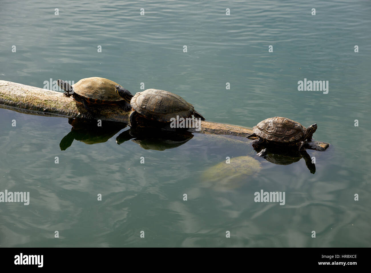 the right direction - Stock Image