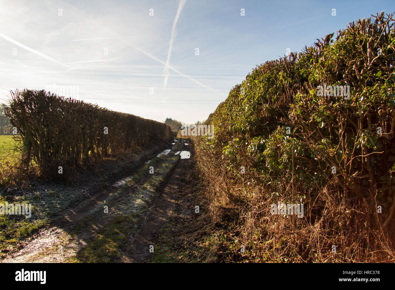 Muddy country path with hedges on both sides Stock Photo