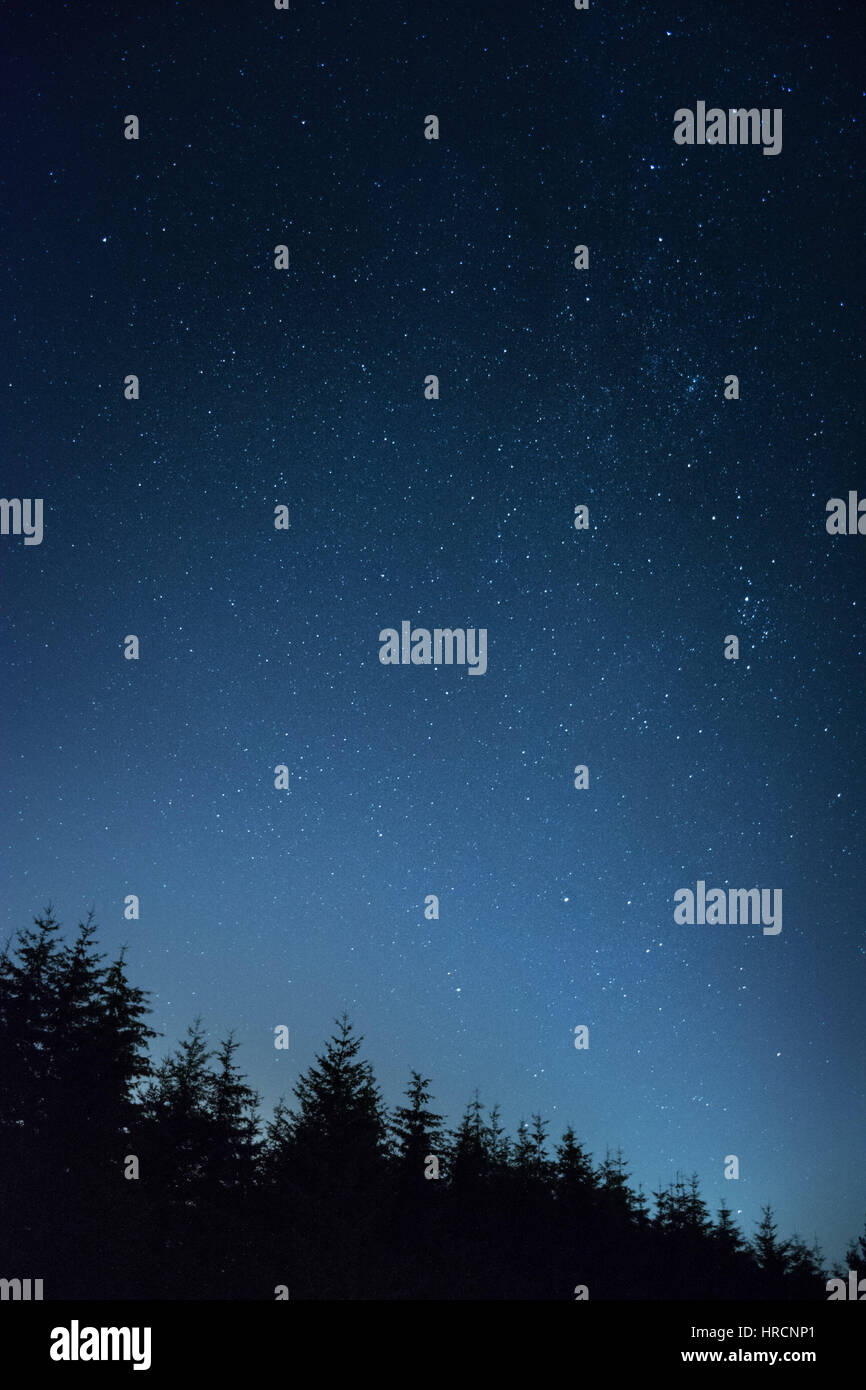 Vertical Galaxy Of Stars Towering Above The Dark Trees Mobile Background Concept