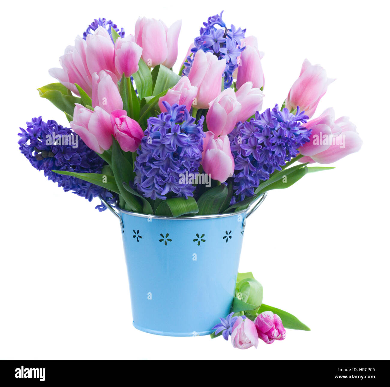 Pink tulips and blue hyacinths flowers in pot vase isolated on white ...