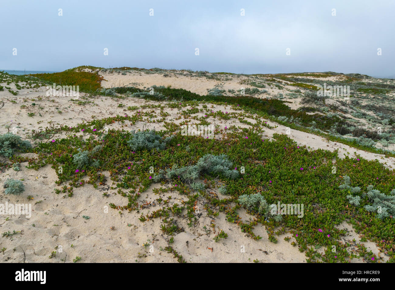 Misty day on Sandy beach near Monterey Bay, Central Pacific coast of California, USA - Stock Image