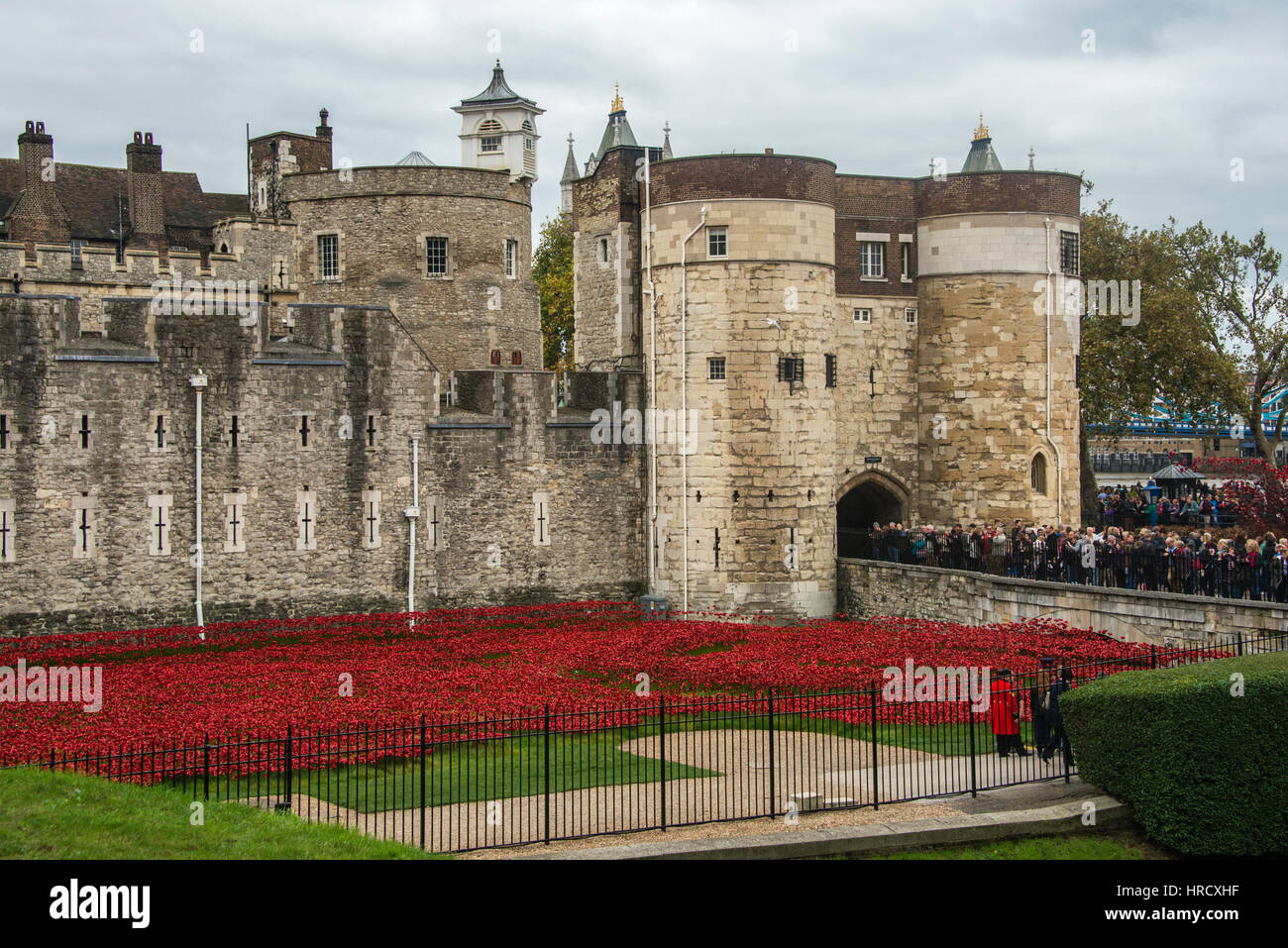 'Blood Swept Lands and Seas of Red'. Close up of the 888,246 ceramic poppies marking the centenary of the - Stock Image