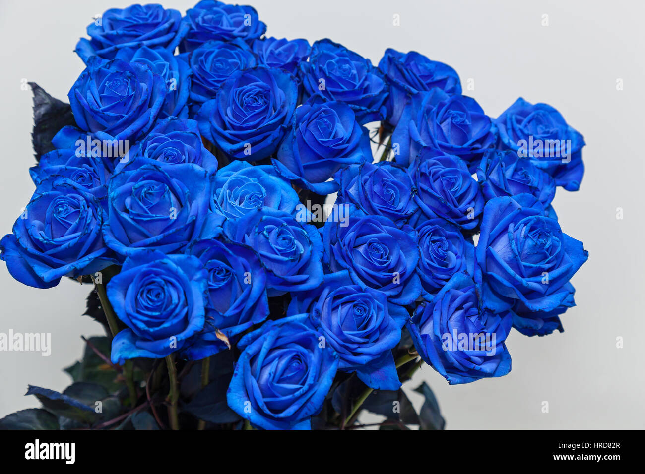 Blue Roses Bouquet Beautiful Roses For Valentines Day Gift Mothers Stock Photo Alamy