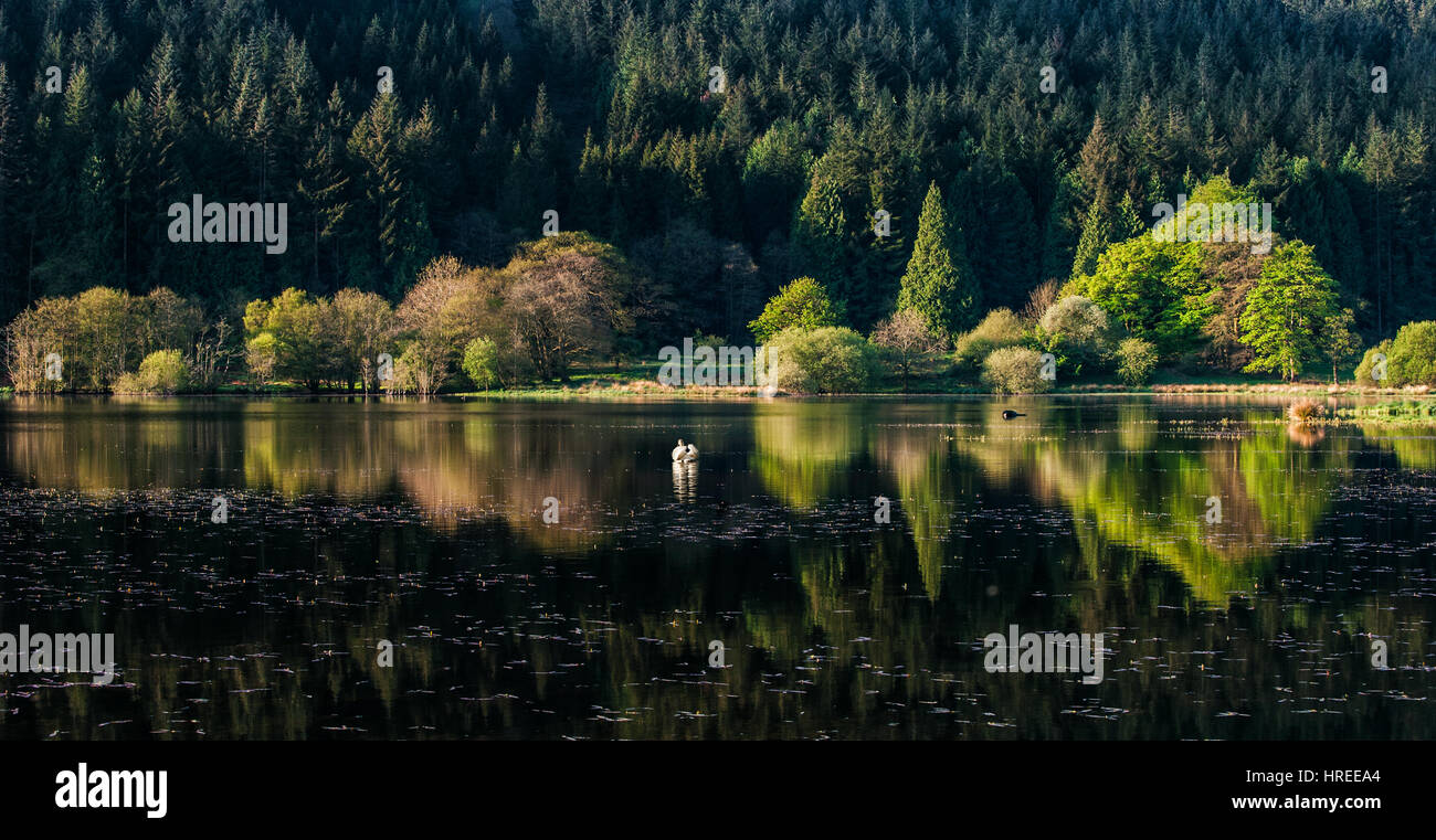 Dawn at Talybont Reservoir in the Brecon Beacons National Park, Wales, UK - Stock Image