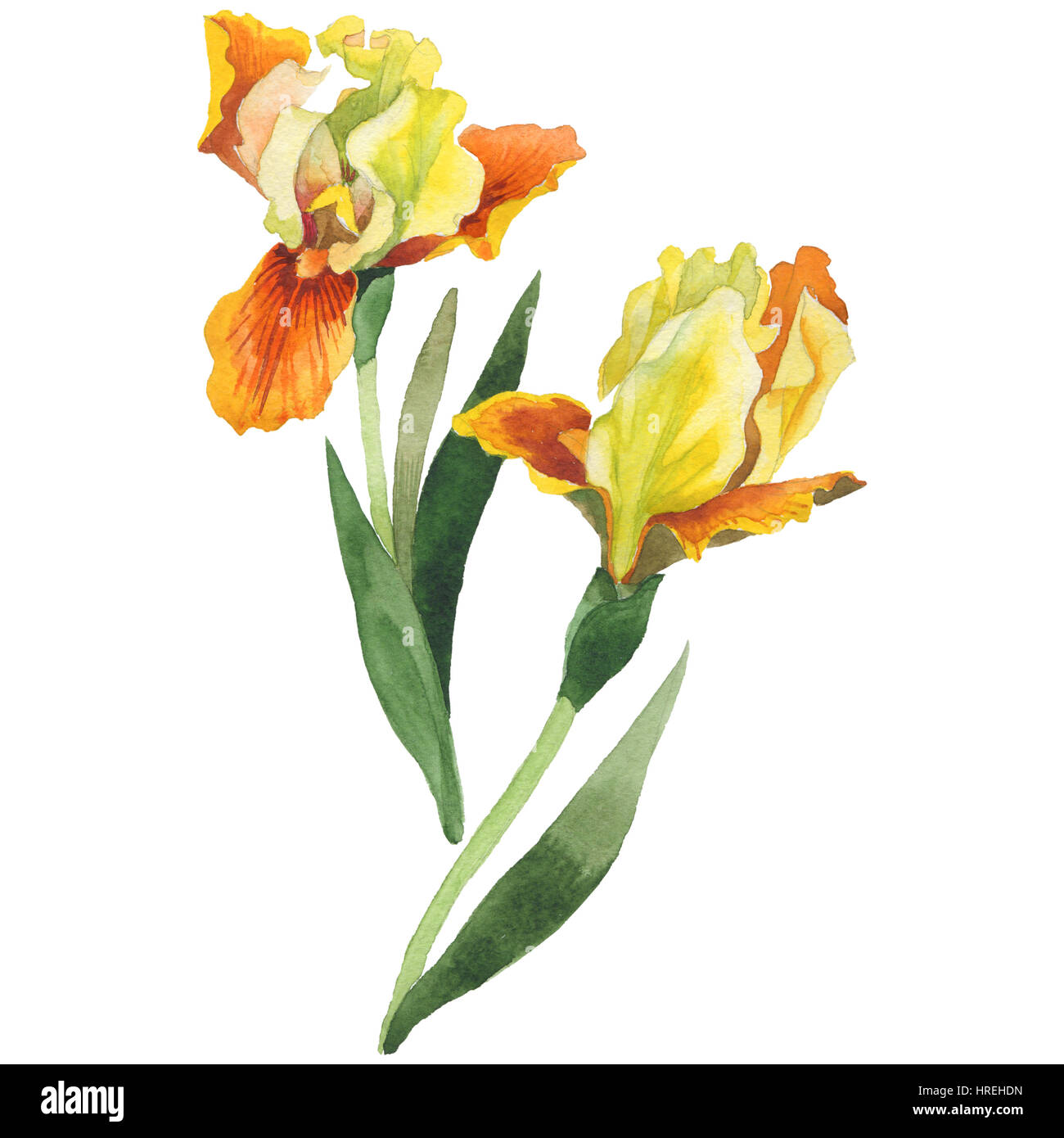 Wild Yellow Iris Cut Out Stock Images Pictures Alamy