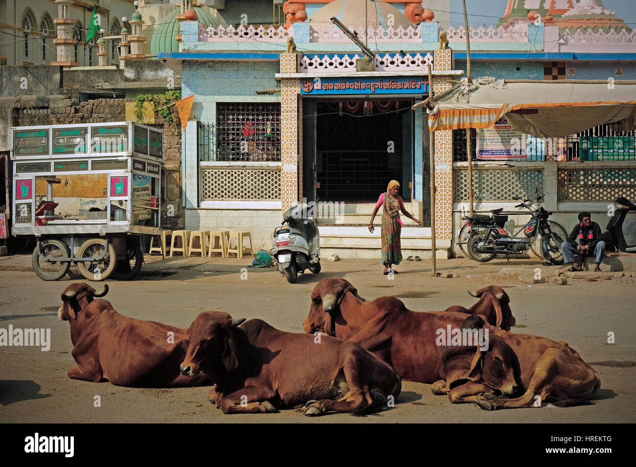 An unidentified worshipper leaves a Hindu temple with an audience of cattle lying in the road in Gondal, India. - Stock Image
