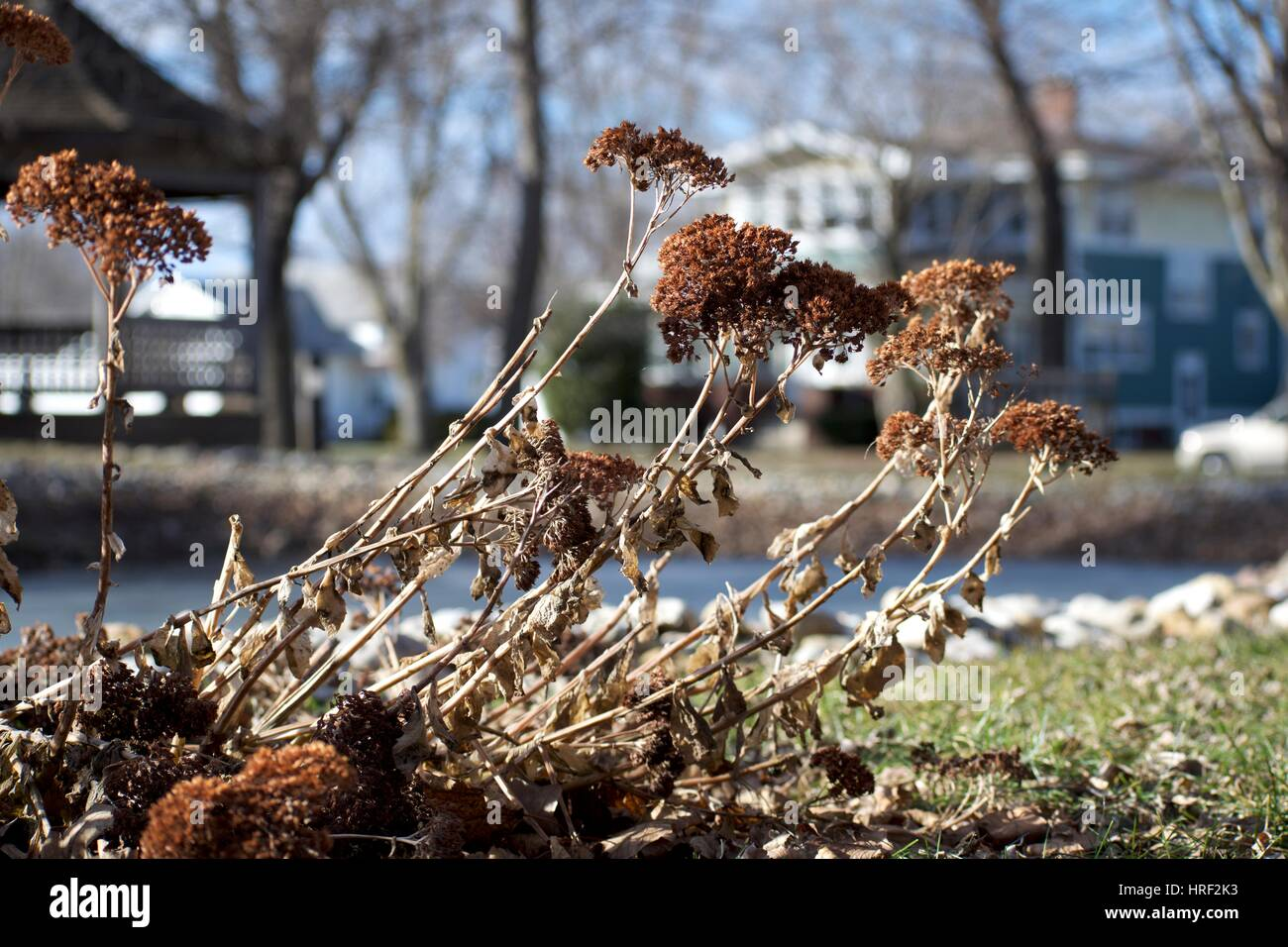 An interesting dead plant by Lund Pond in Forest City, Iowa. - Stock Image