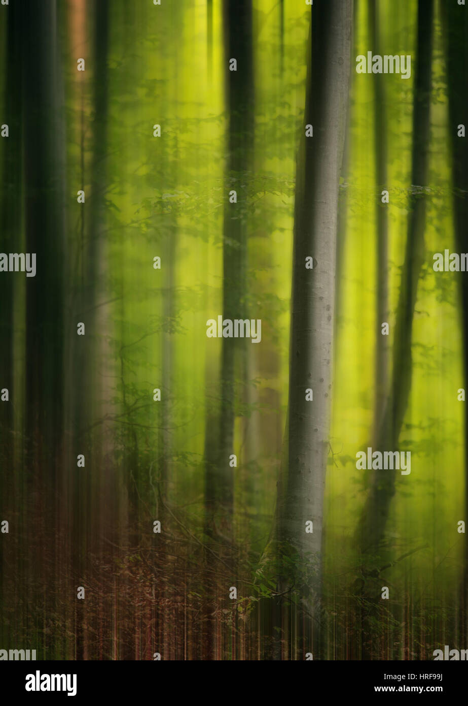 Abstract motion blurred vertical trees panoramic background green abstract motion blurred vertical trees panoramic background green prime colors voltagebd Images