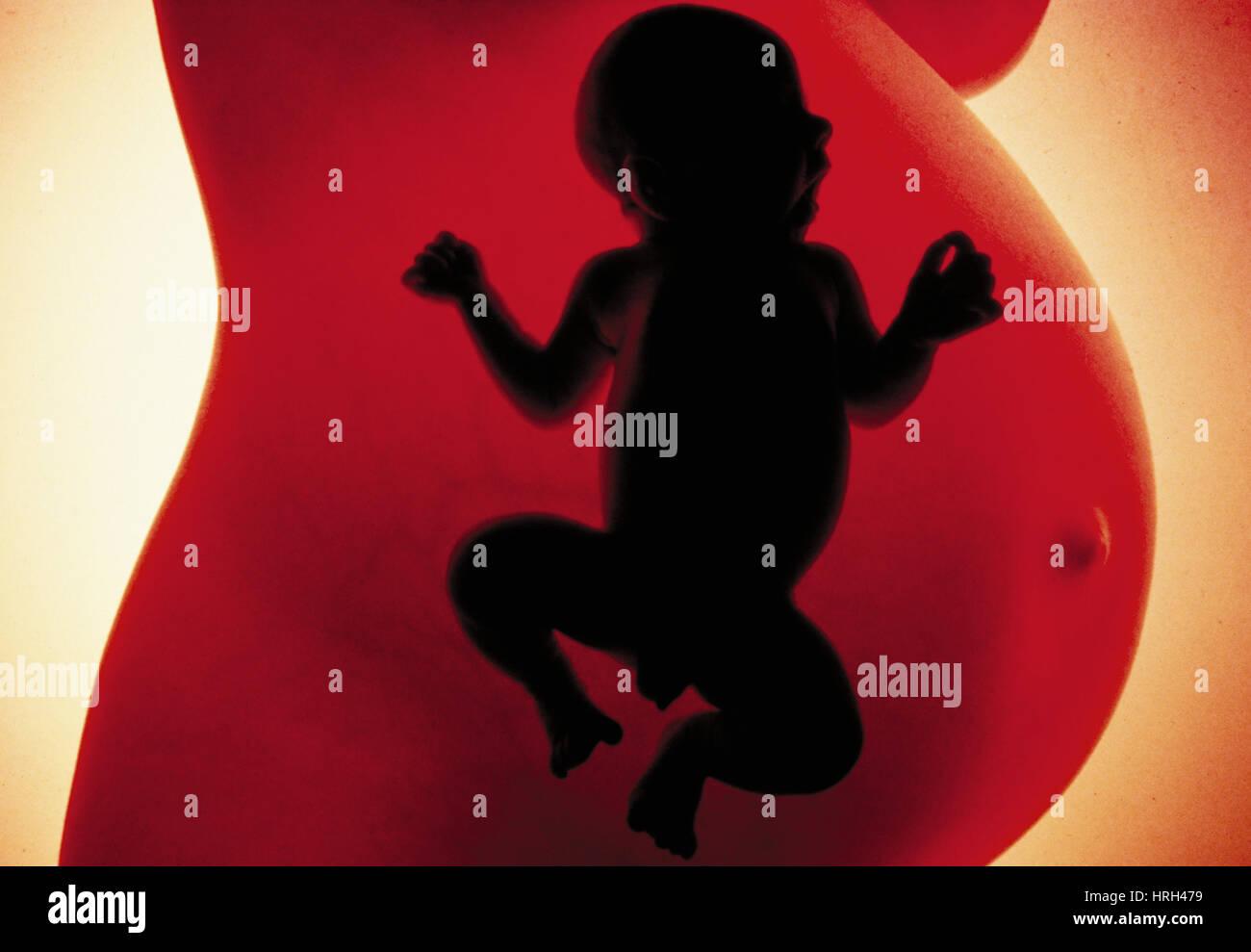 Human reproduction - Stock Image