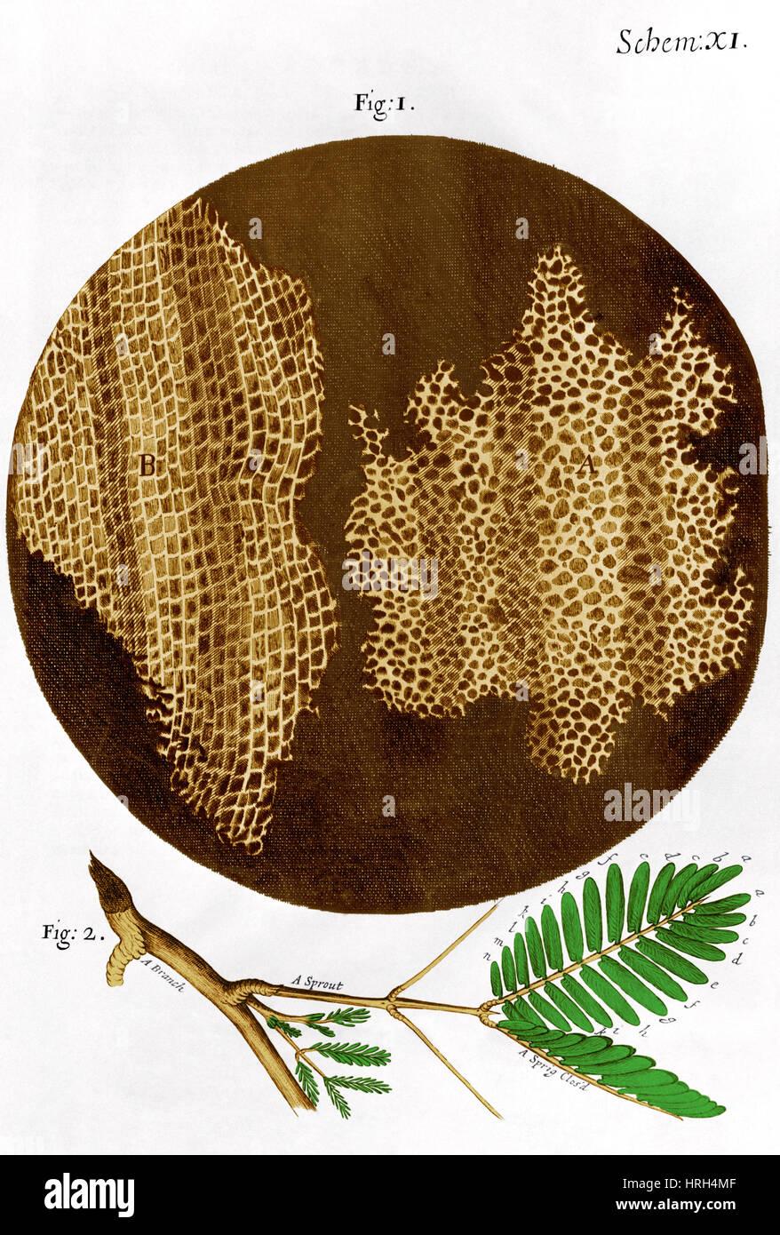 Illustration of cork wood cells Stock Photo