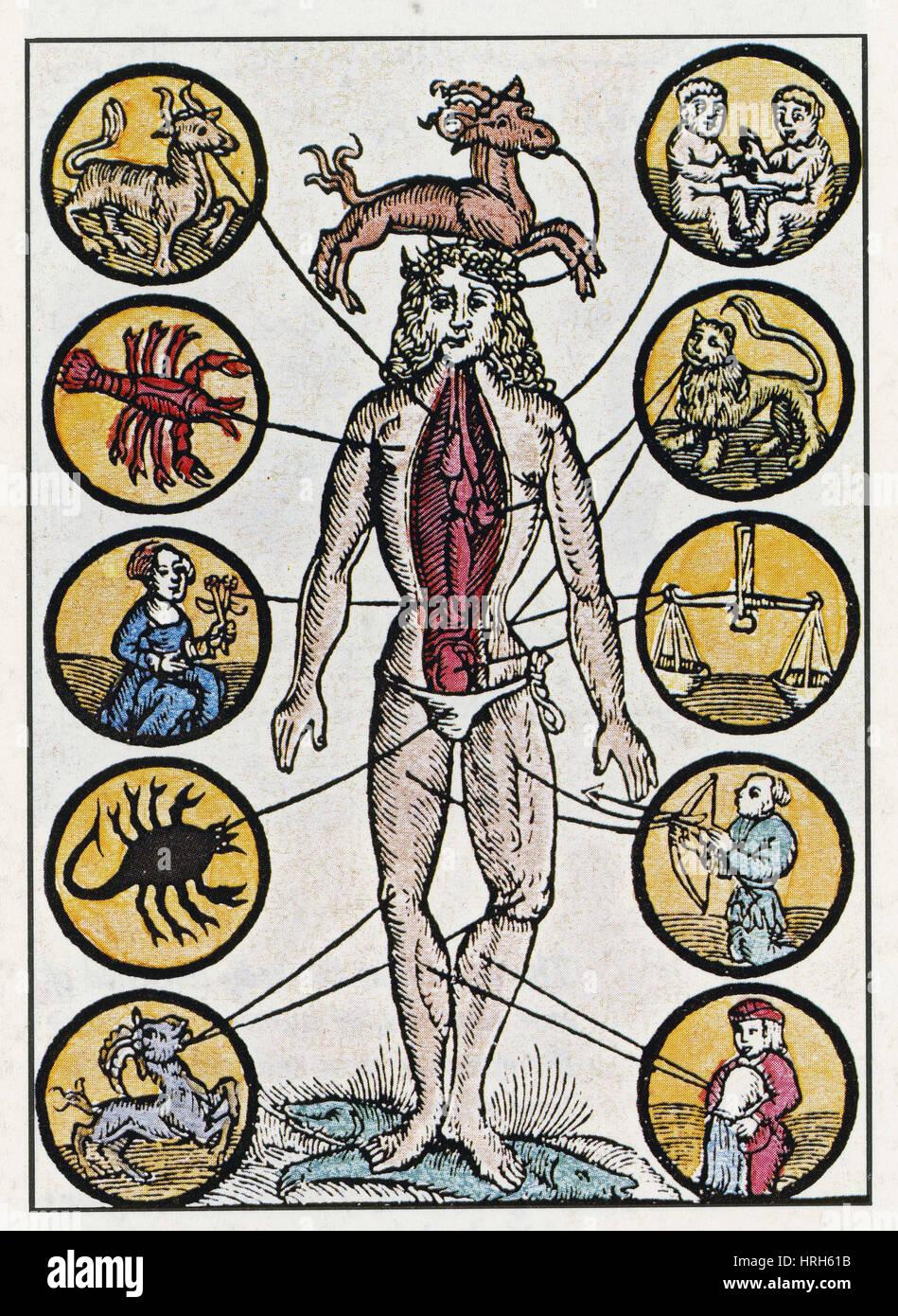Medical Zodiac Man, 16th Century Stock Photo: 134987591 - Alamy