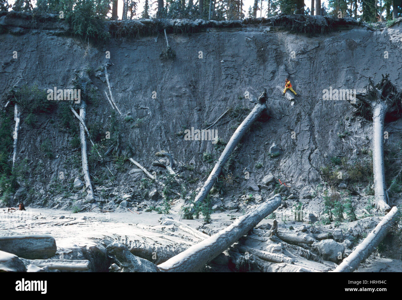 Aftermath of Mount St. Helens - Stock Image