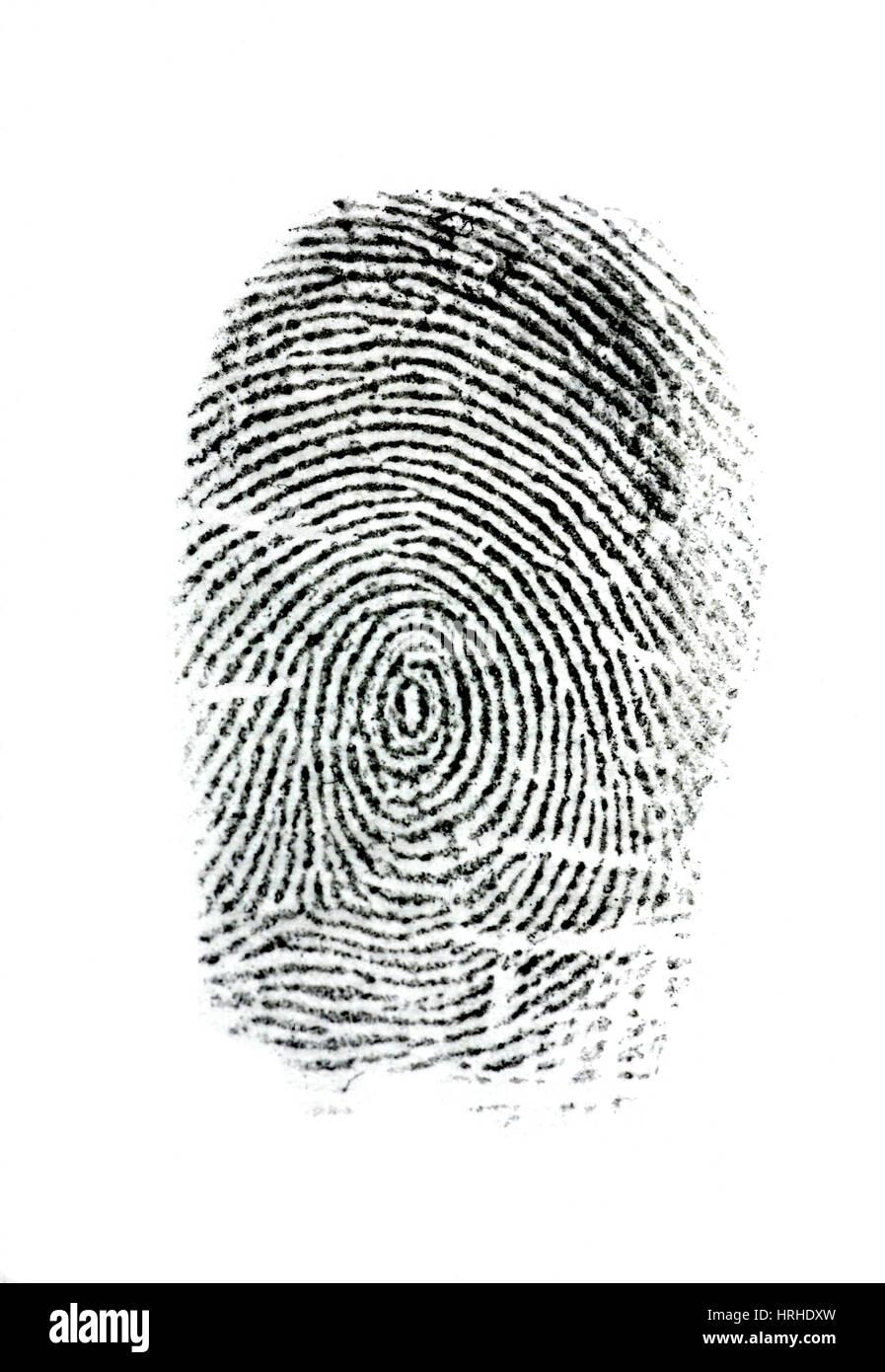galton fingerprints