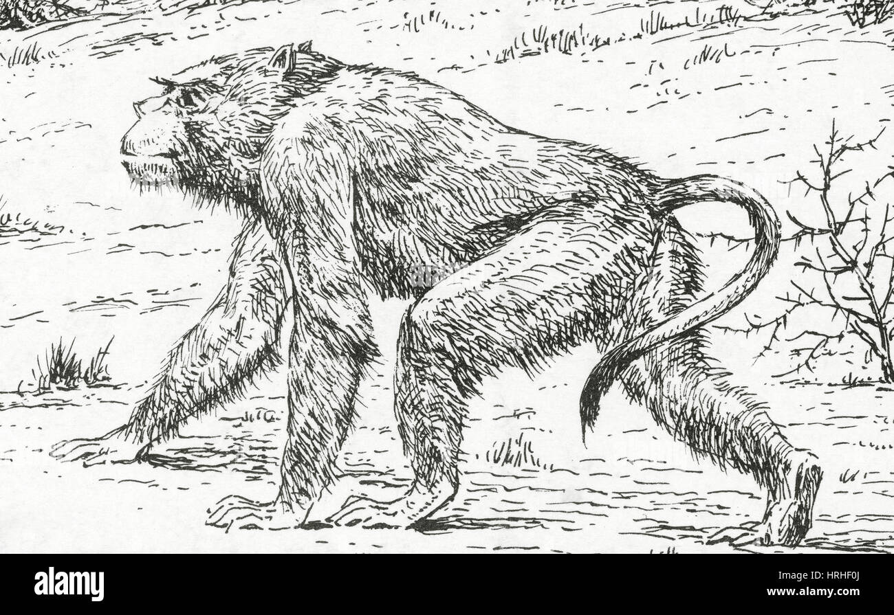 Image of: Scary Prehistoric Extinct Animals Alamy Prehistoric Extinct Animals Stock Photo 134994626 Alamy