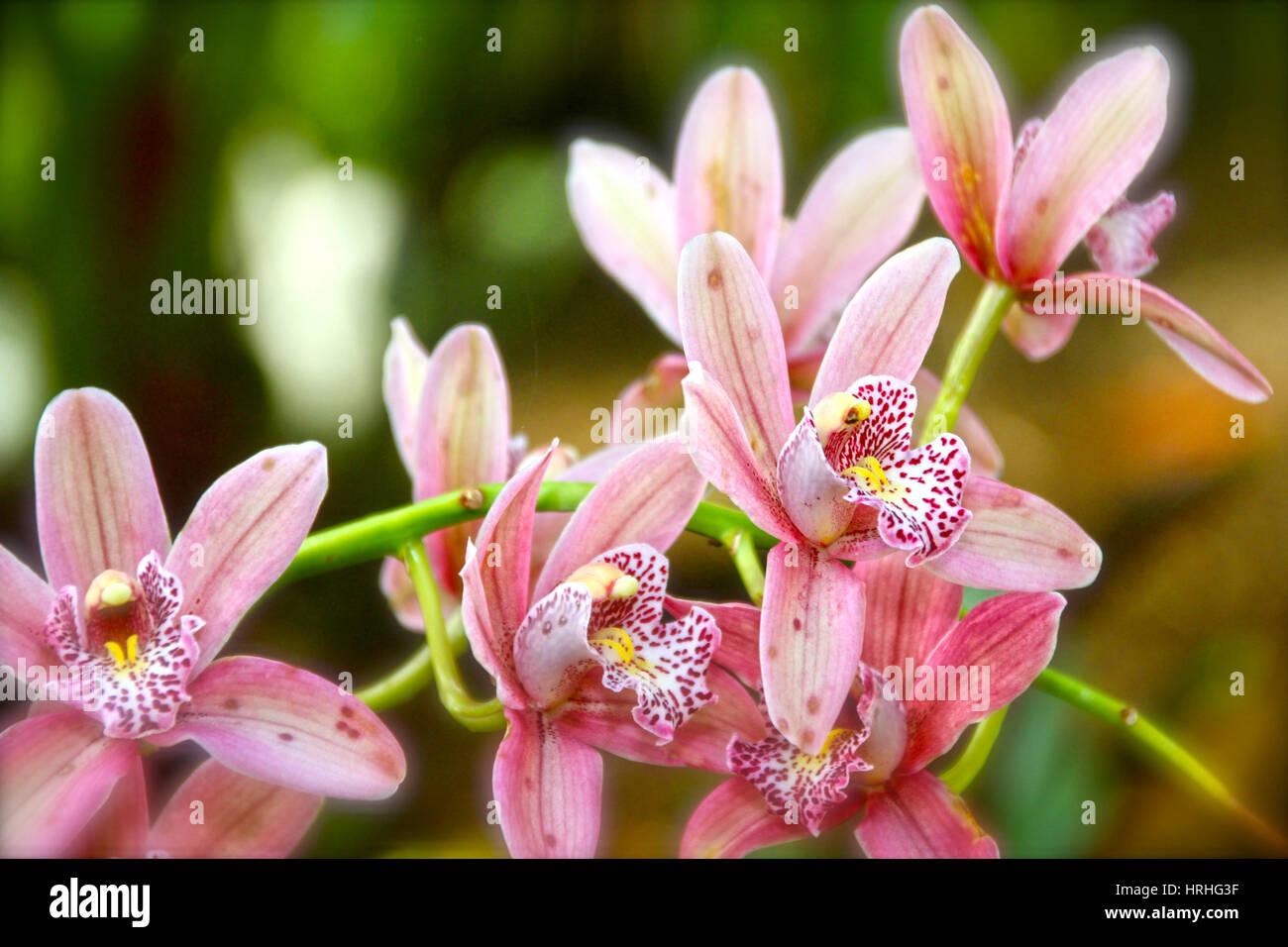 Flower Screensaver Stock Photos Flower Screensaver Stock Images