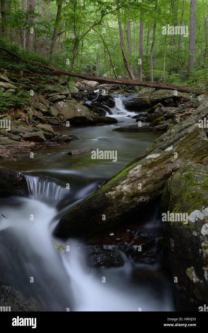 First morning light in Catoctin Mountain Park - Stock Image