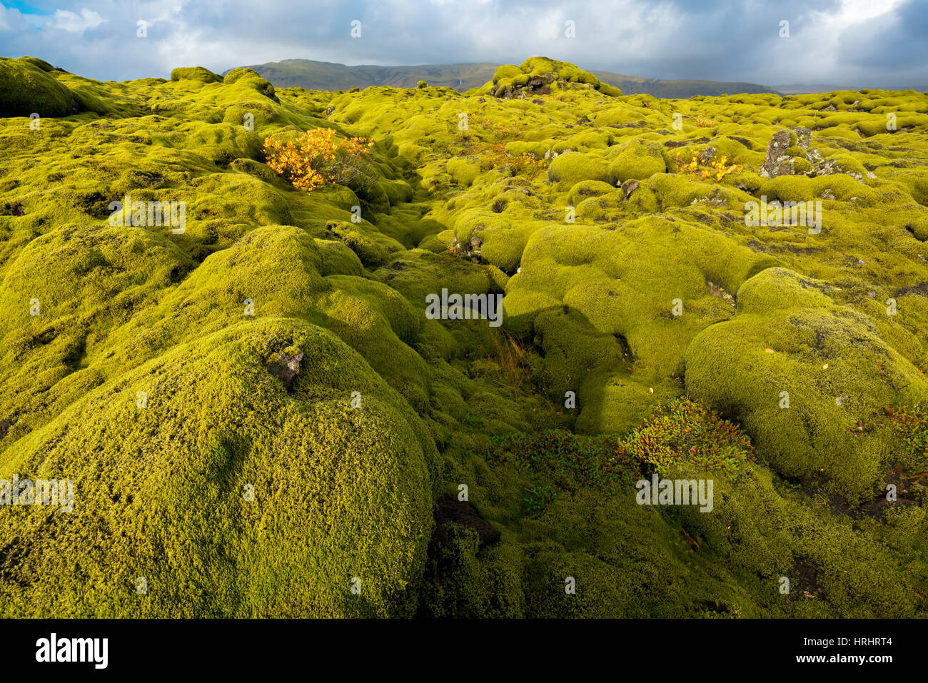 Landscape of lava covered in moss, South Iceland, Polar Regions - Stock Image